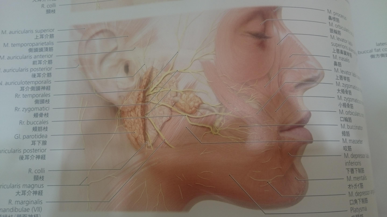 再発を繰り返す顎周囲のアテローム